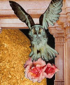 owl-ghazal-pic.jpg