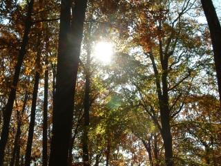 sun-tree.jpg
