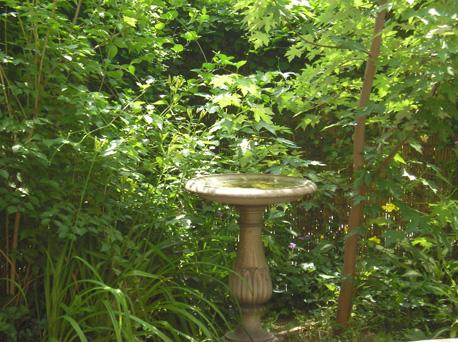 back-garden-bath.jpg
